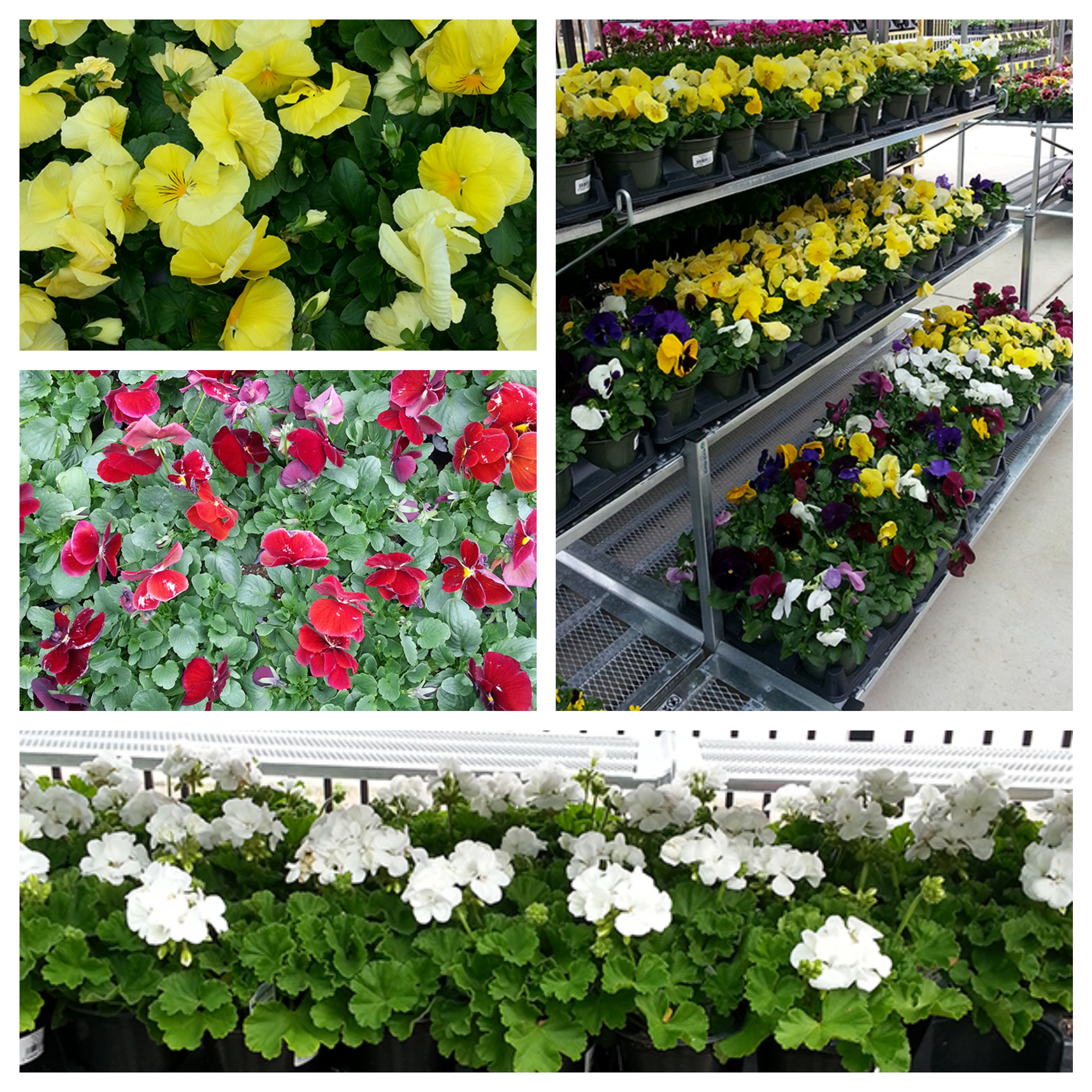 Lusbyflowers Fotor Collage Sneade S Ace Home Centers