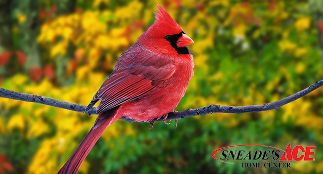 Expert Tips How To Attract Birds This Winter Sneade S